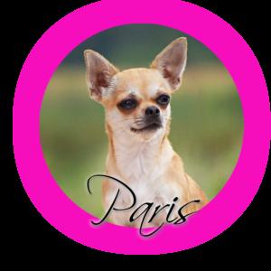 agoxa love in paris