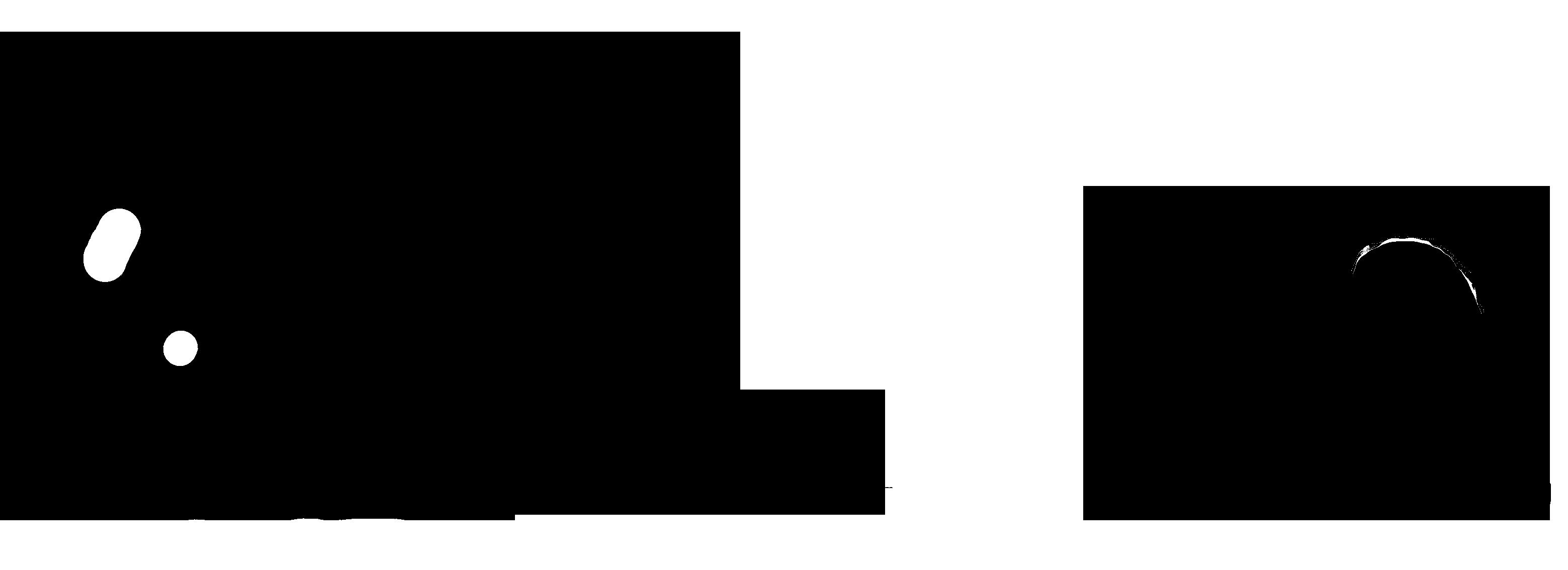Terier brazylijski
